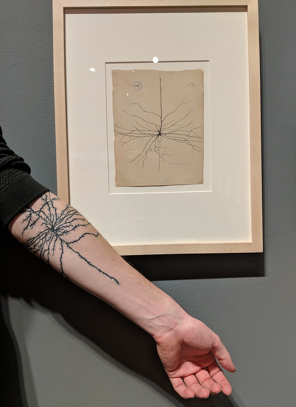 a person holds their arm out to show a tattoo on their forearm of a neuron, while standing in front of a drawing of the same neruron